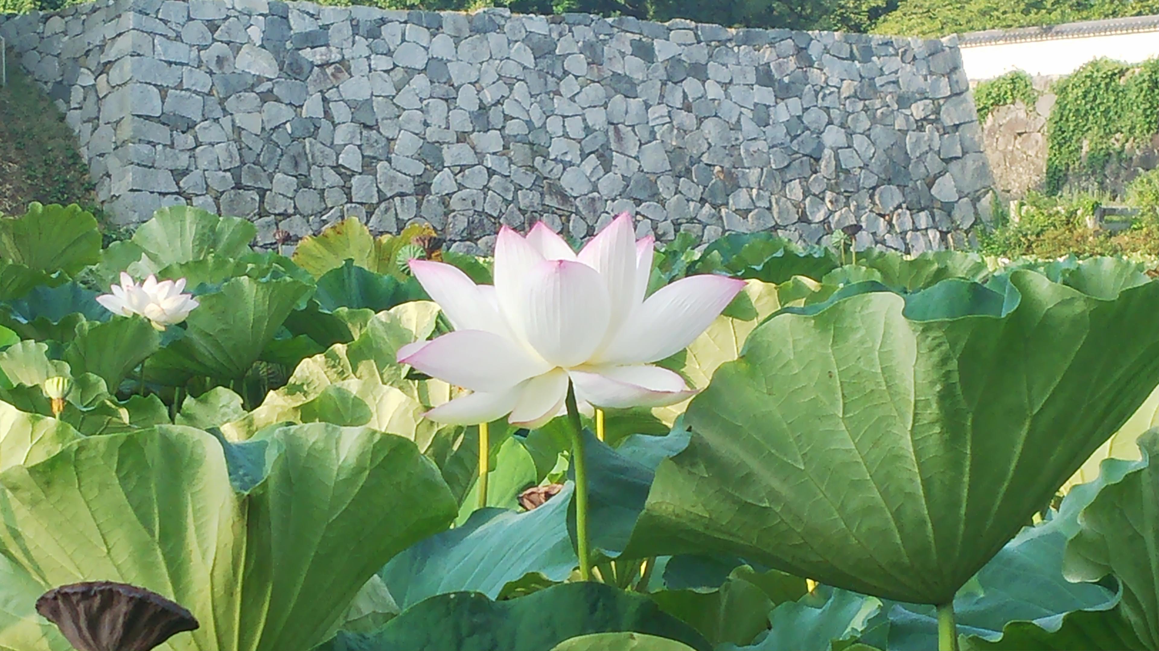 http://www.midorimachi.jp/blog/%E2%91%A0%EF%BC%97%EF%BC%9A%EF%BC%90%EF%BC%94.JPG