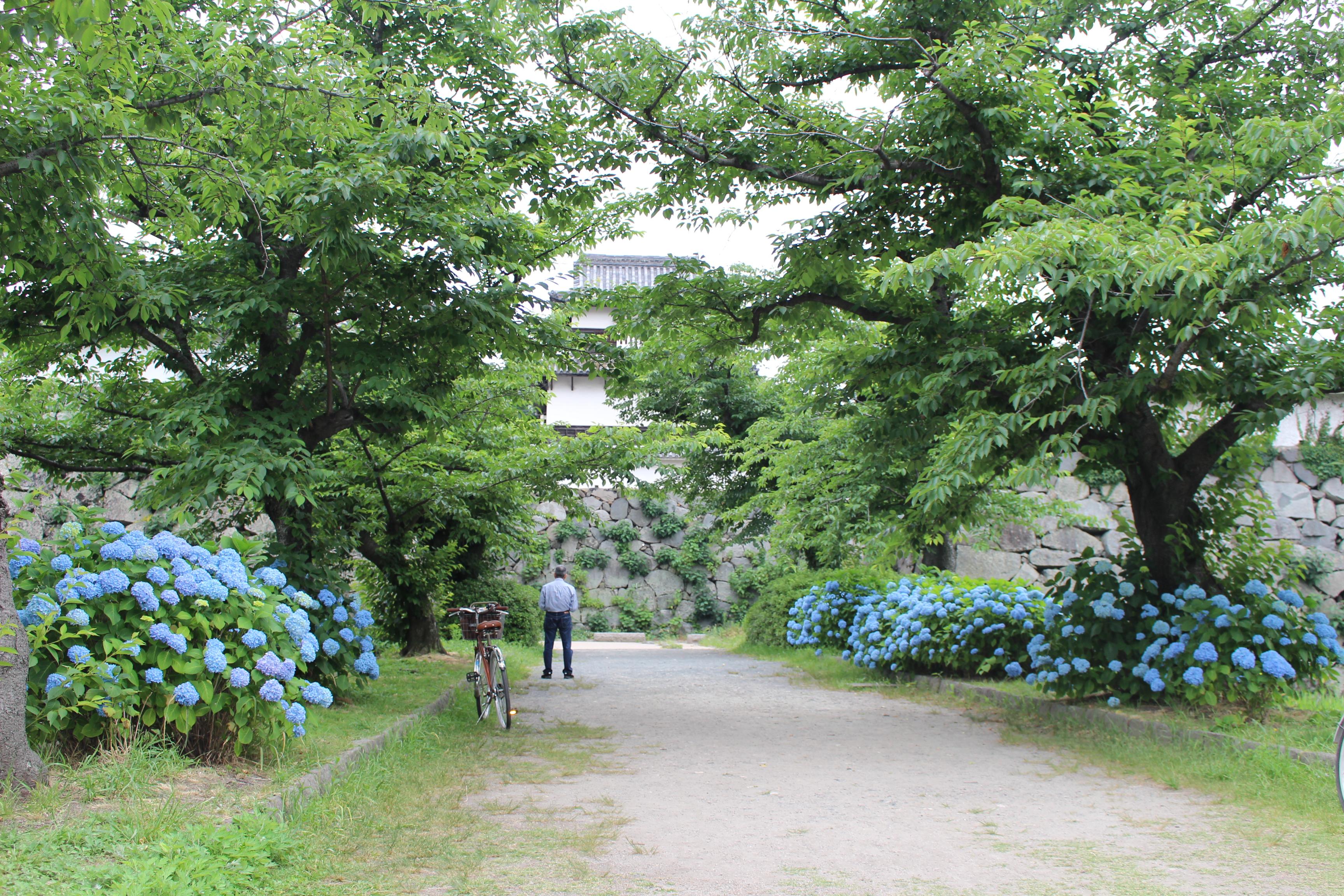 http://www.midorimachi.jp/blog/20140602%20%281%29.JPG