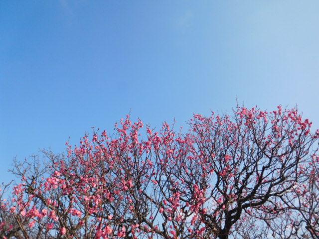 http://www.midorimachi.jp/blog/DSCN3480.JPG