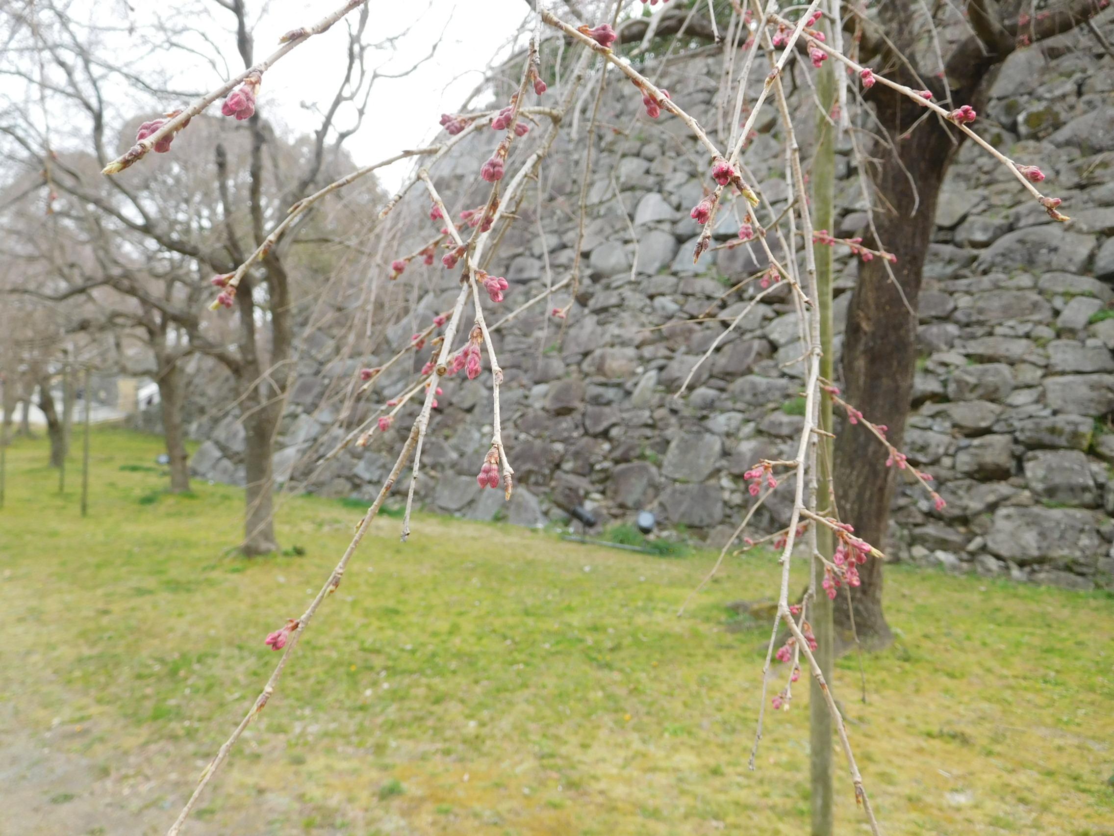 http://www.midorimachi.jp/blog/DSCN3667.JPG