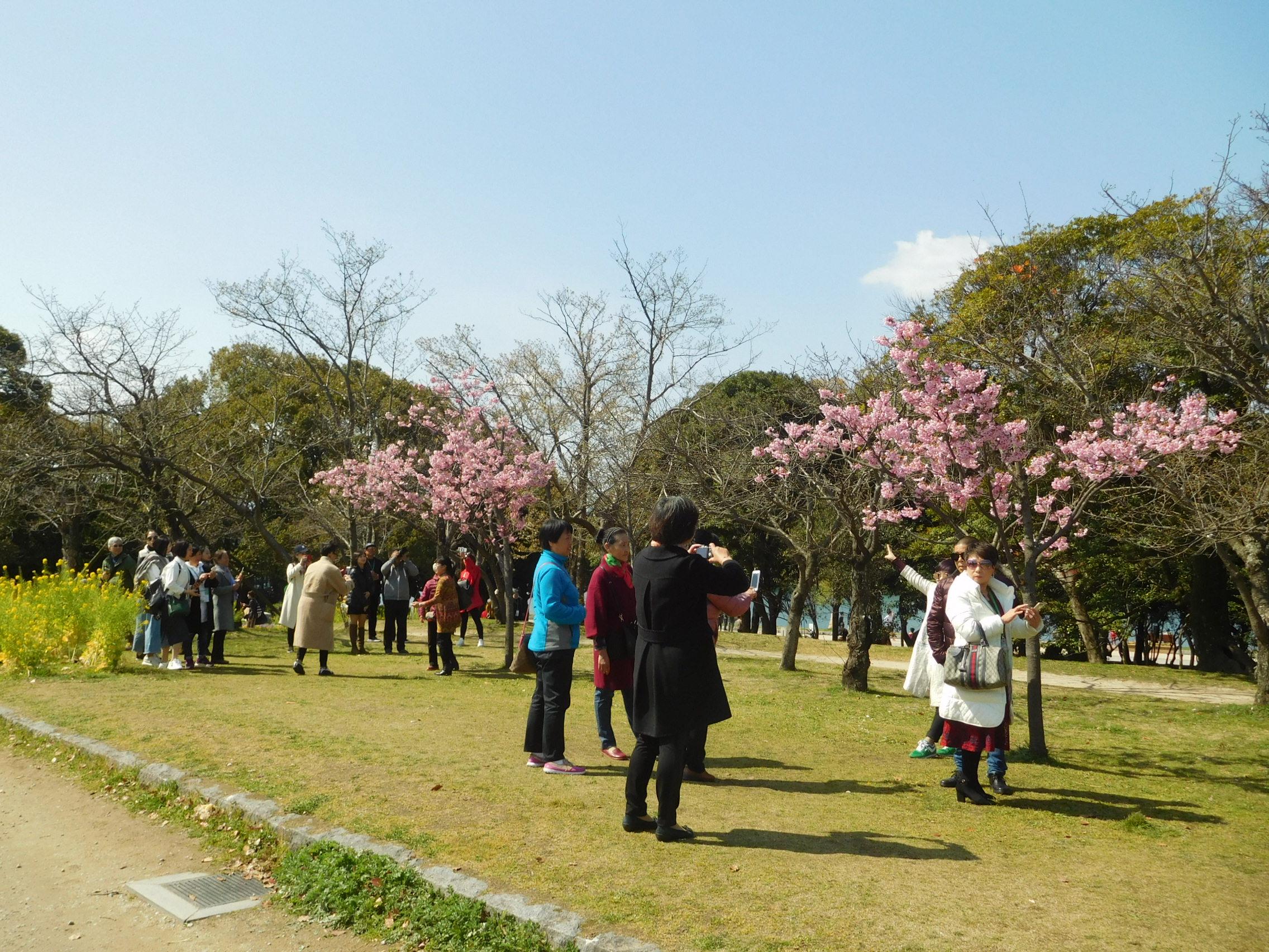http://www.midorimachi.jp/blog/DSCN3722.JPG