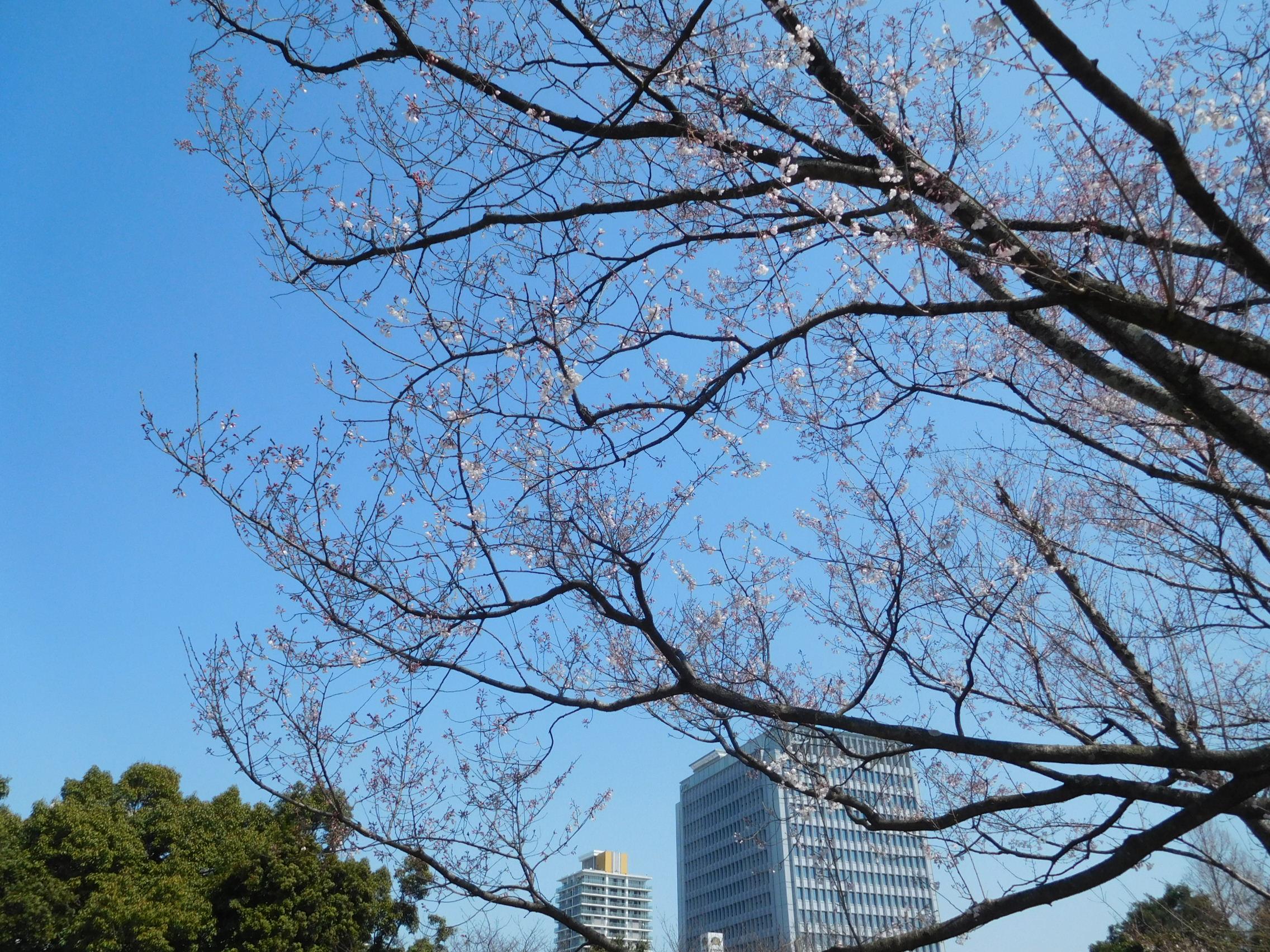 http://www.midorimachi.jp/blog/DSCN3736.JPG