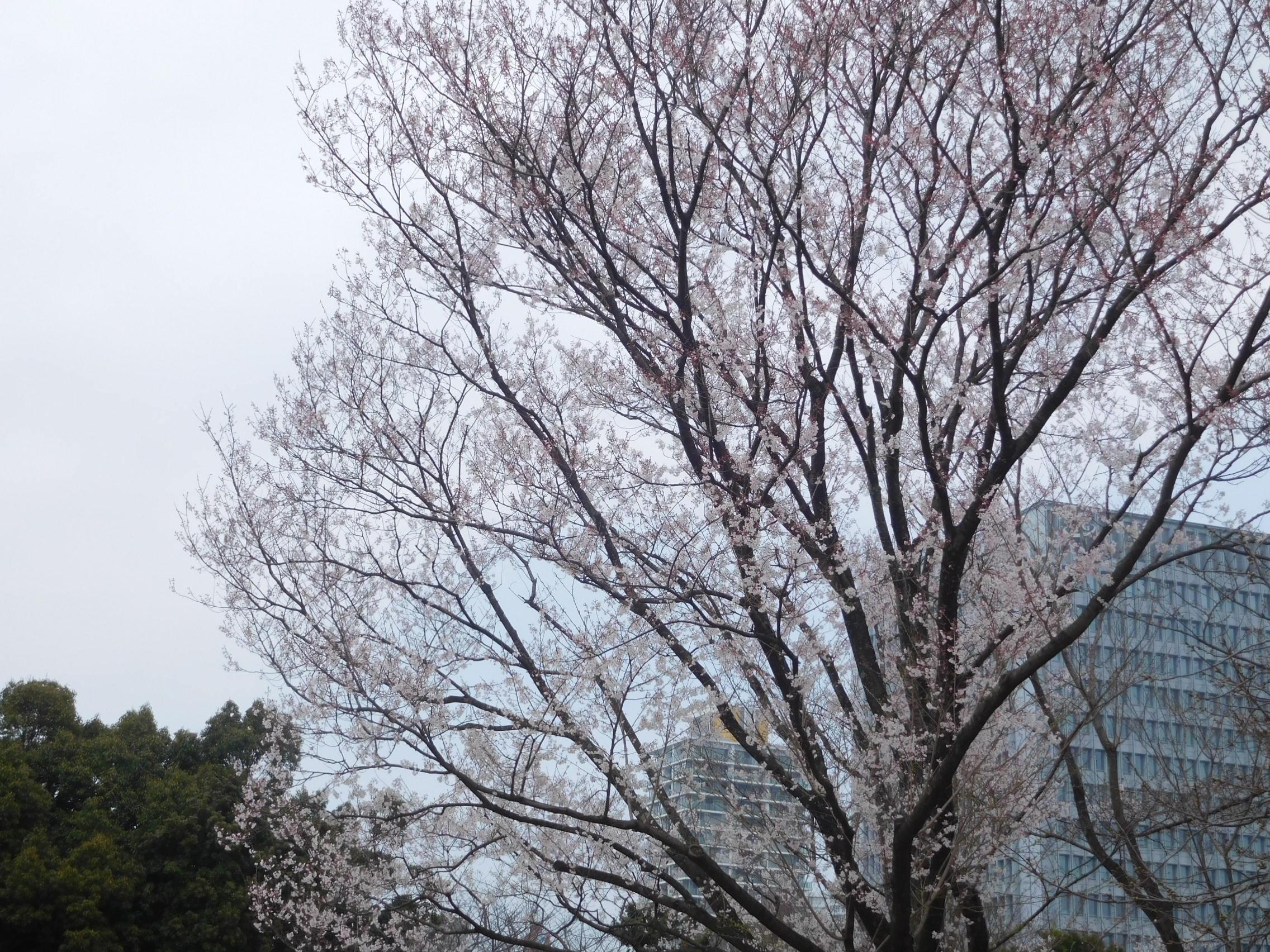 http://www.midorimachi.jp/blog/DSCN3789.JPG