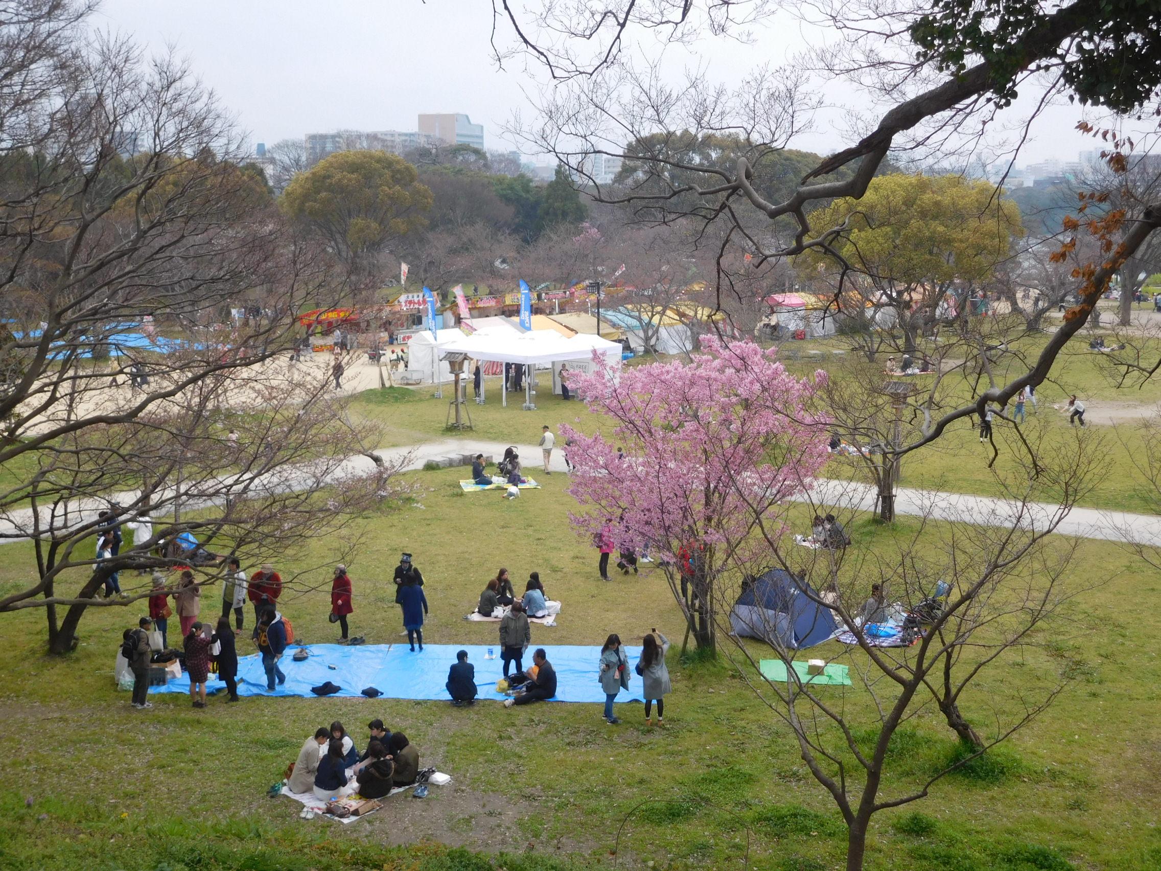 http://www.midorimachi.jp/blog/DSCN3793.JPG