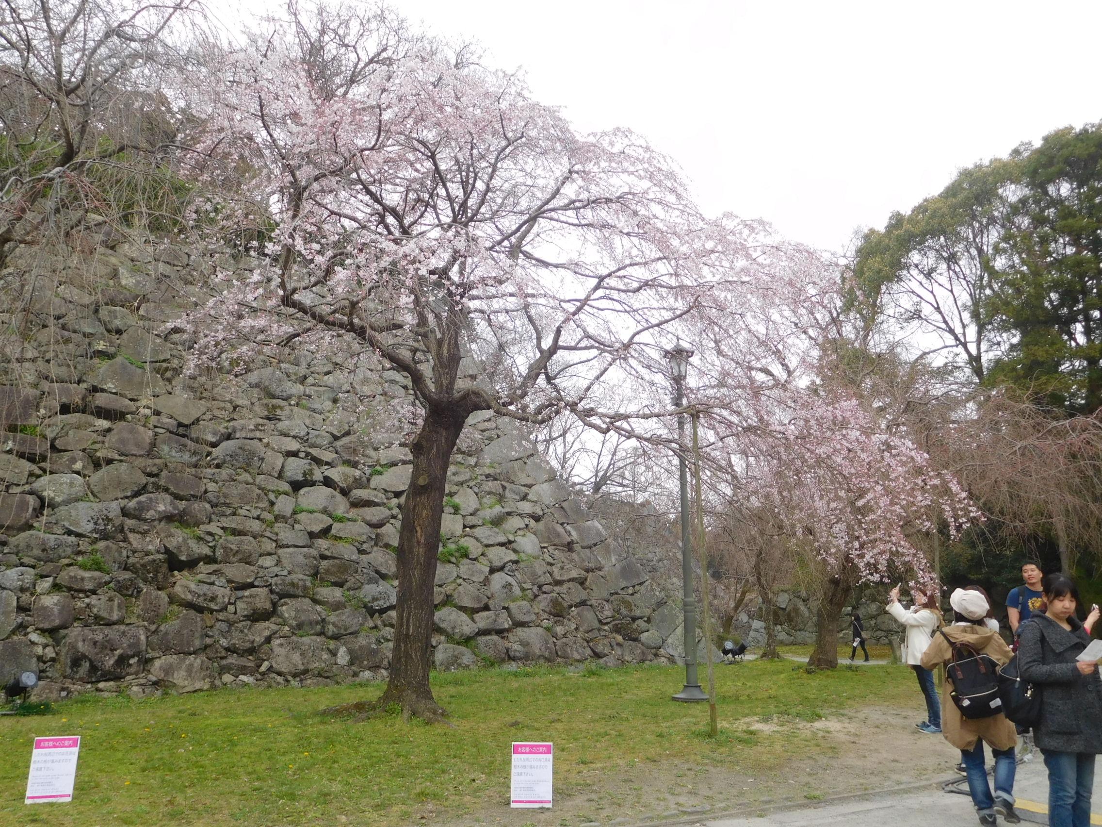 http://www.midorimachi.jp/blog/DSCN3826.JPG