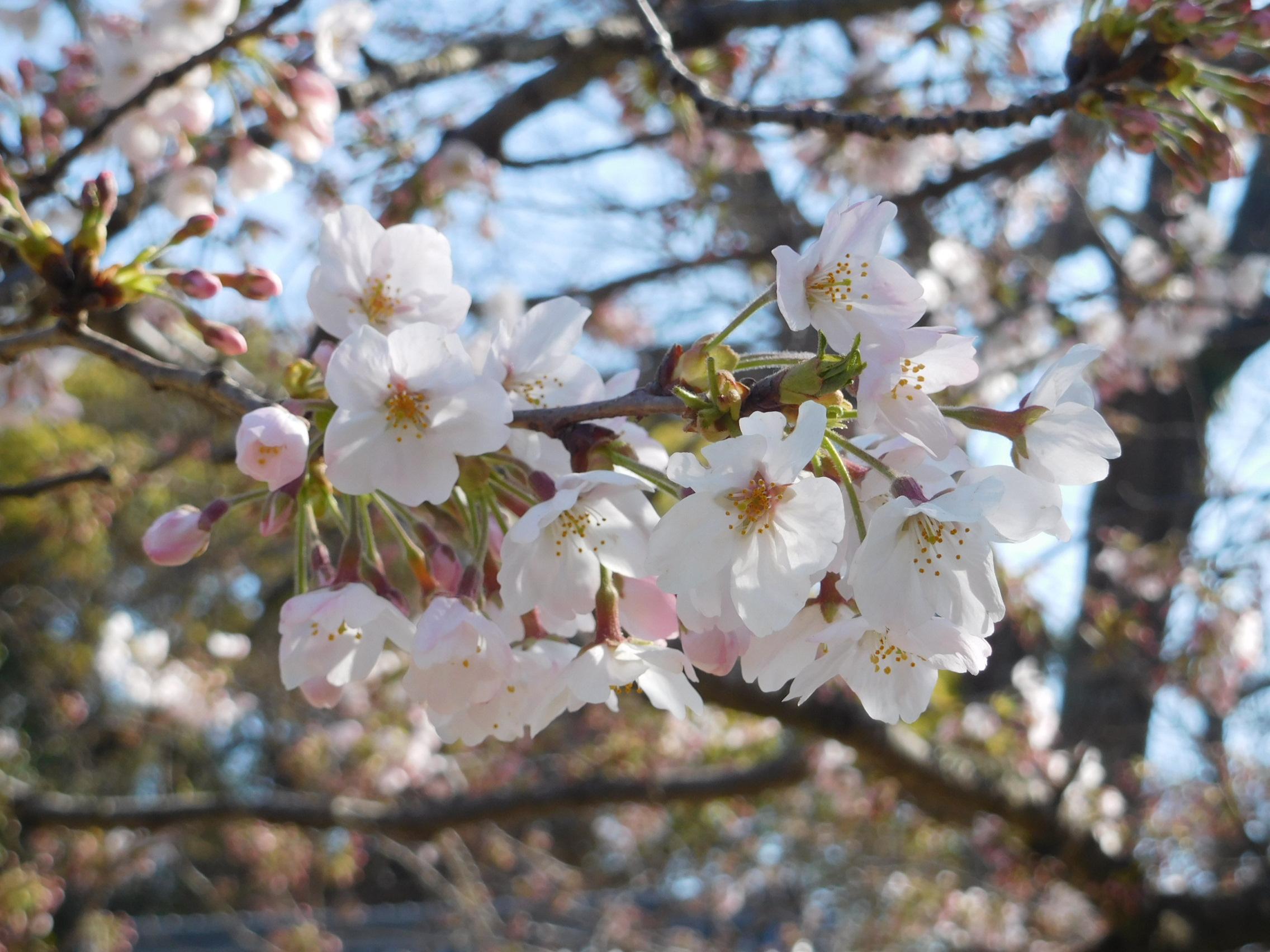 http://www.midorimachi.jp/blog/DSCN3867.JPG