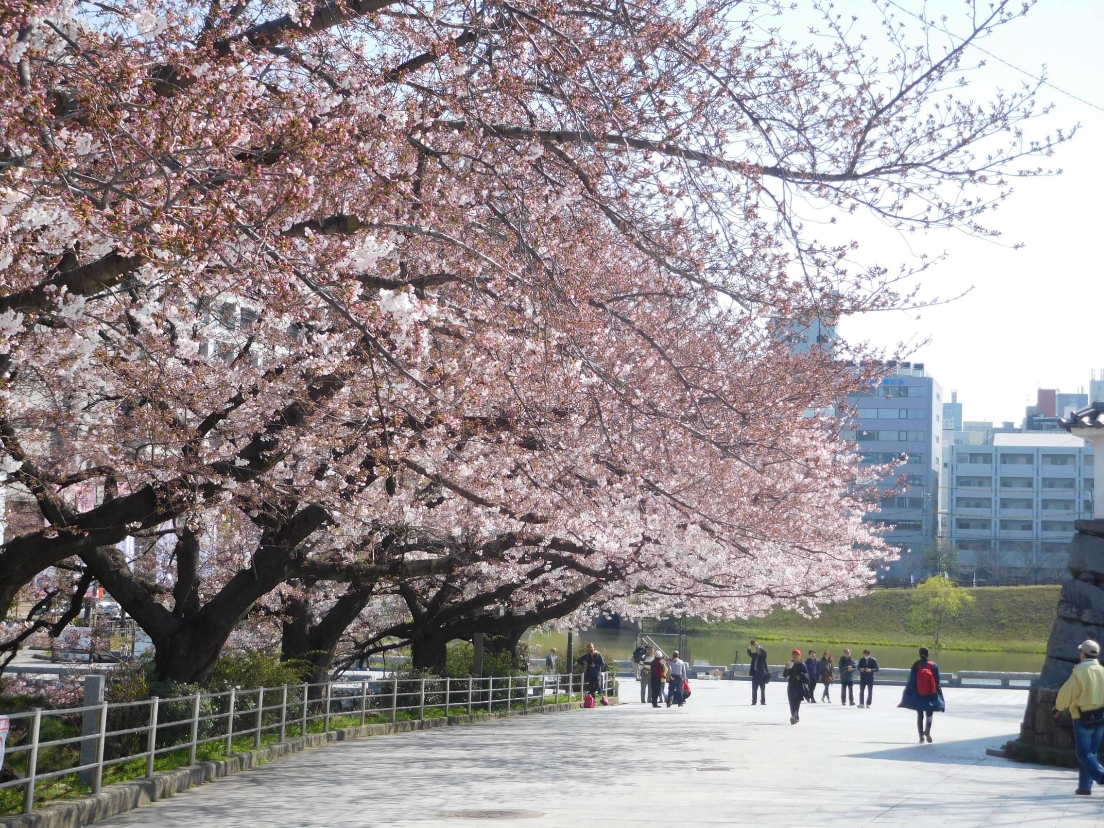 http://www.midorimachi.jp/blog/DSCN3881.JPG