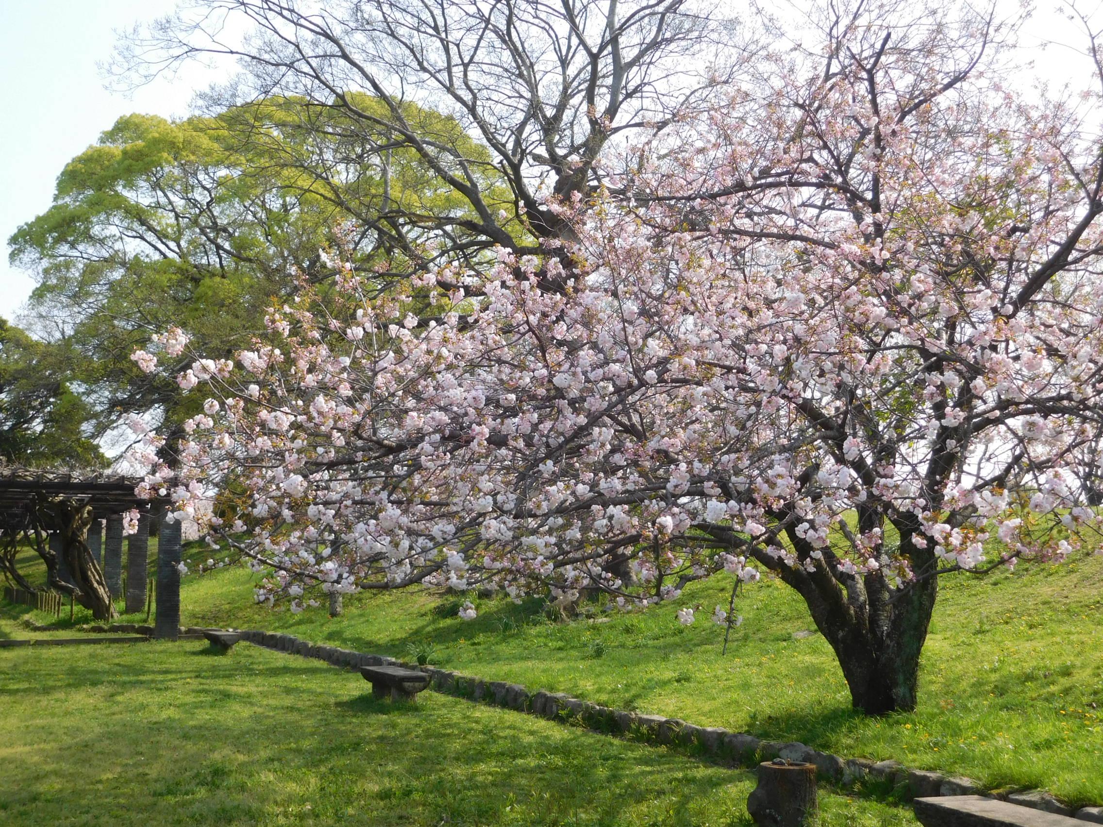 http://www.midorimachi.jp/blog/DSCN3962.JPG