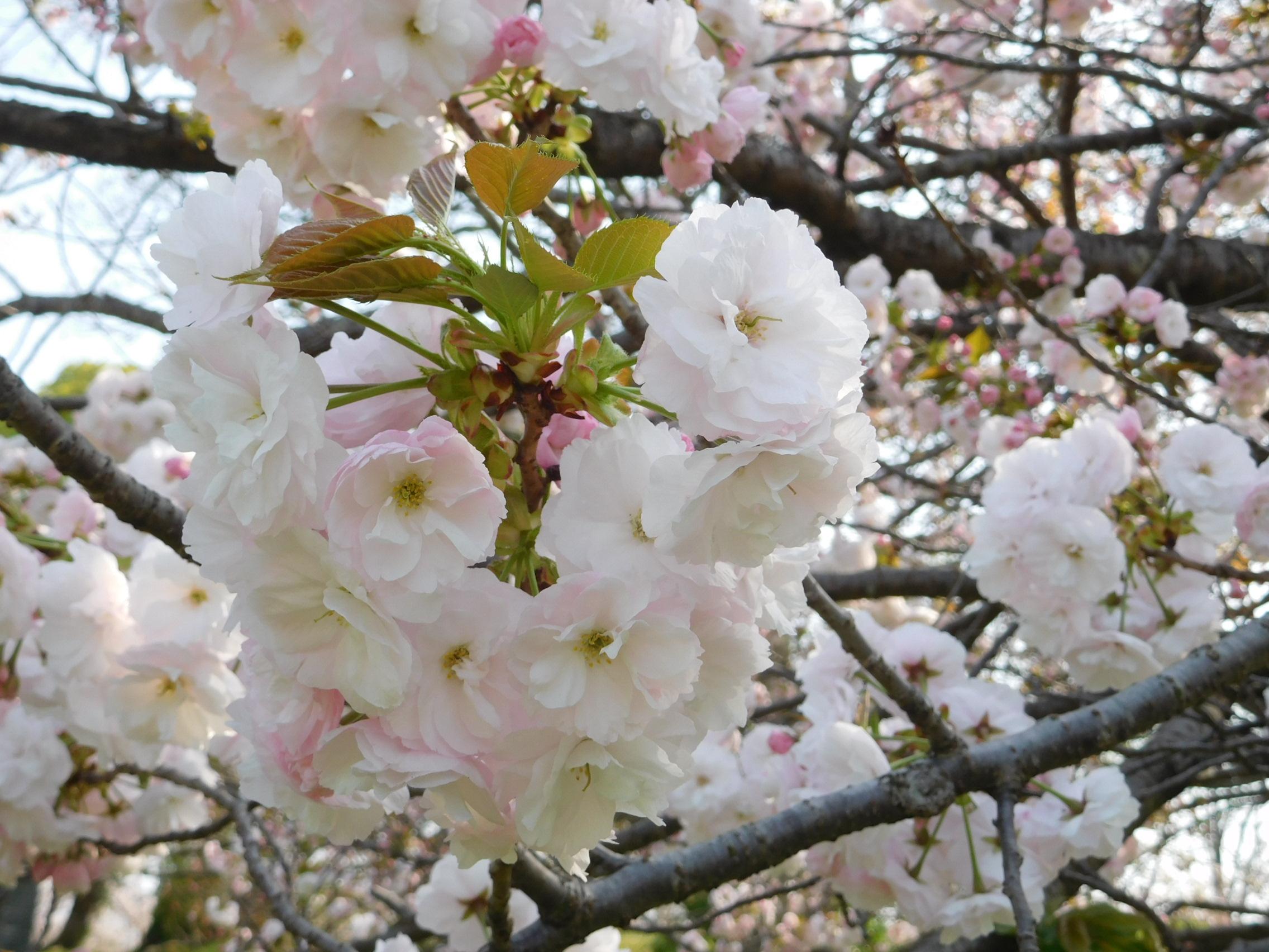 http://www.midorimachi.jp/blog/DSCN3963.JPG