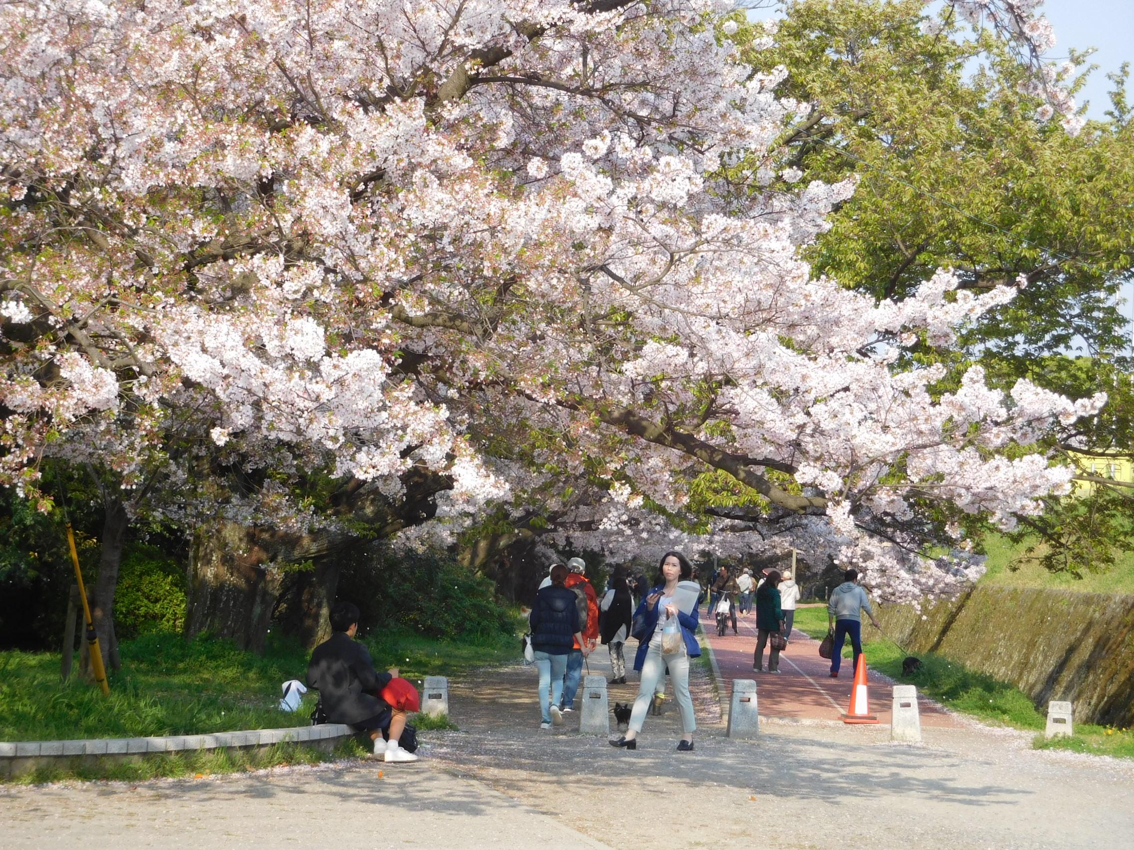 http://www.midorimachi.jp/blog/DSCN3972.JPG