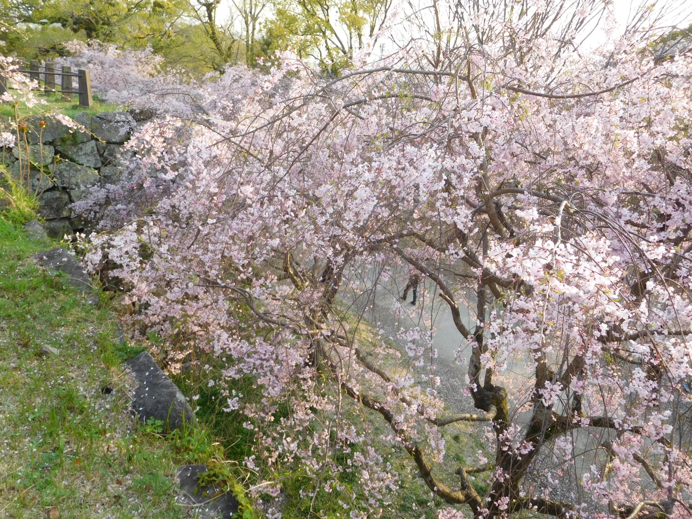 http://www.midorimachi.jp/blog/DSCN4006.JPG
