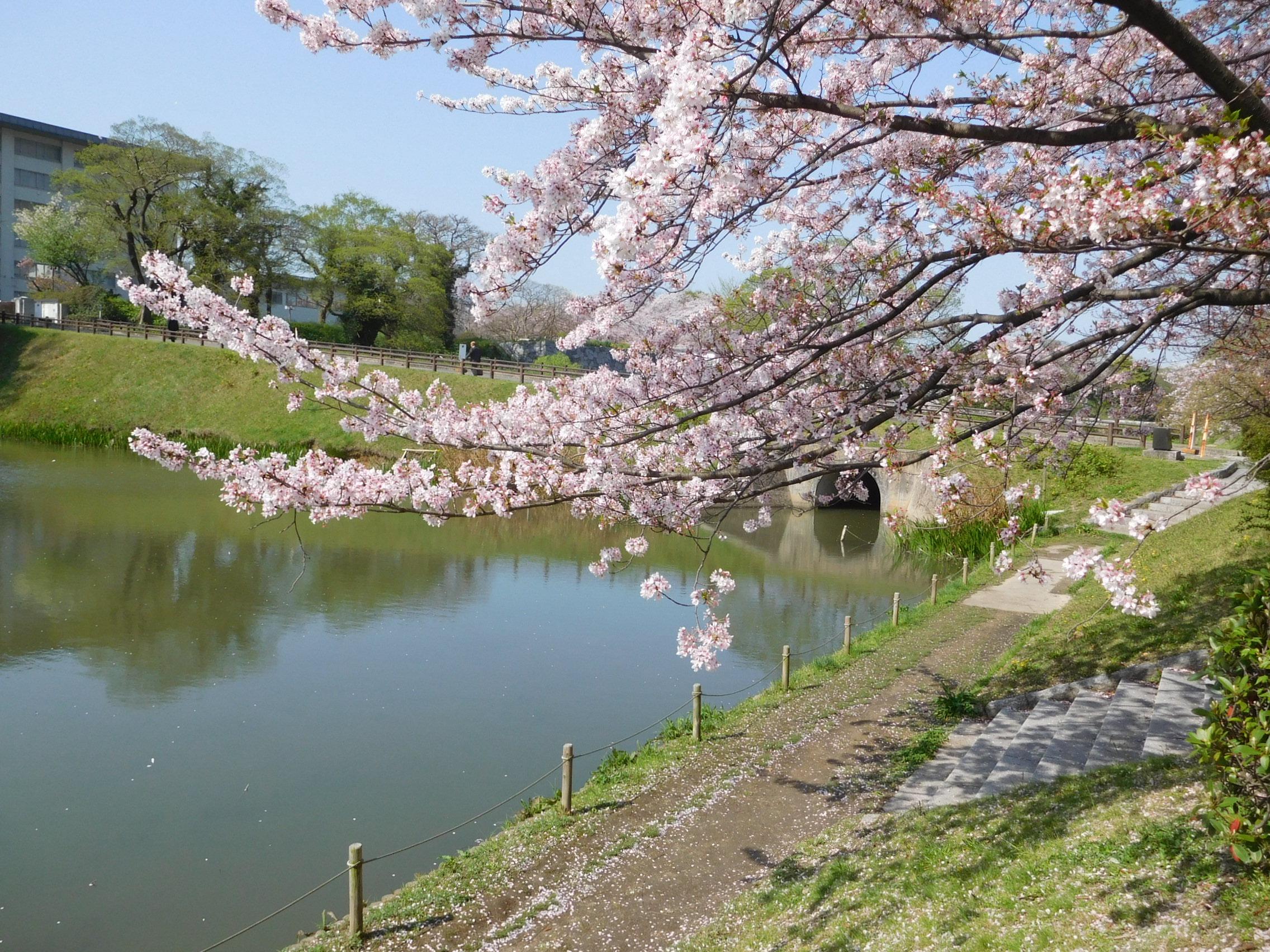 http://www.midorimachi.jp/blog/DSCN4035.JPG