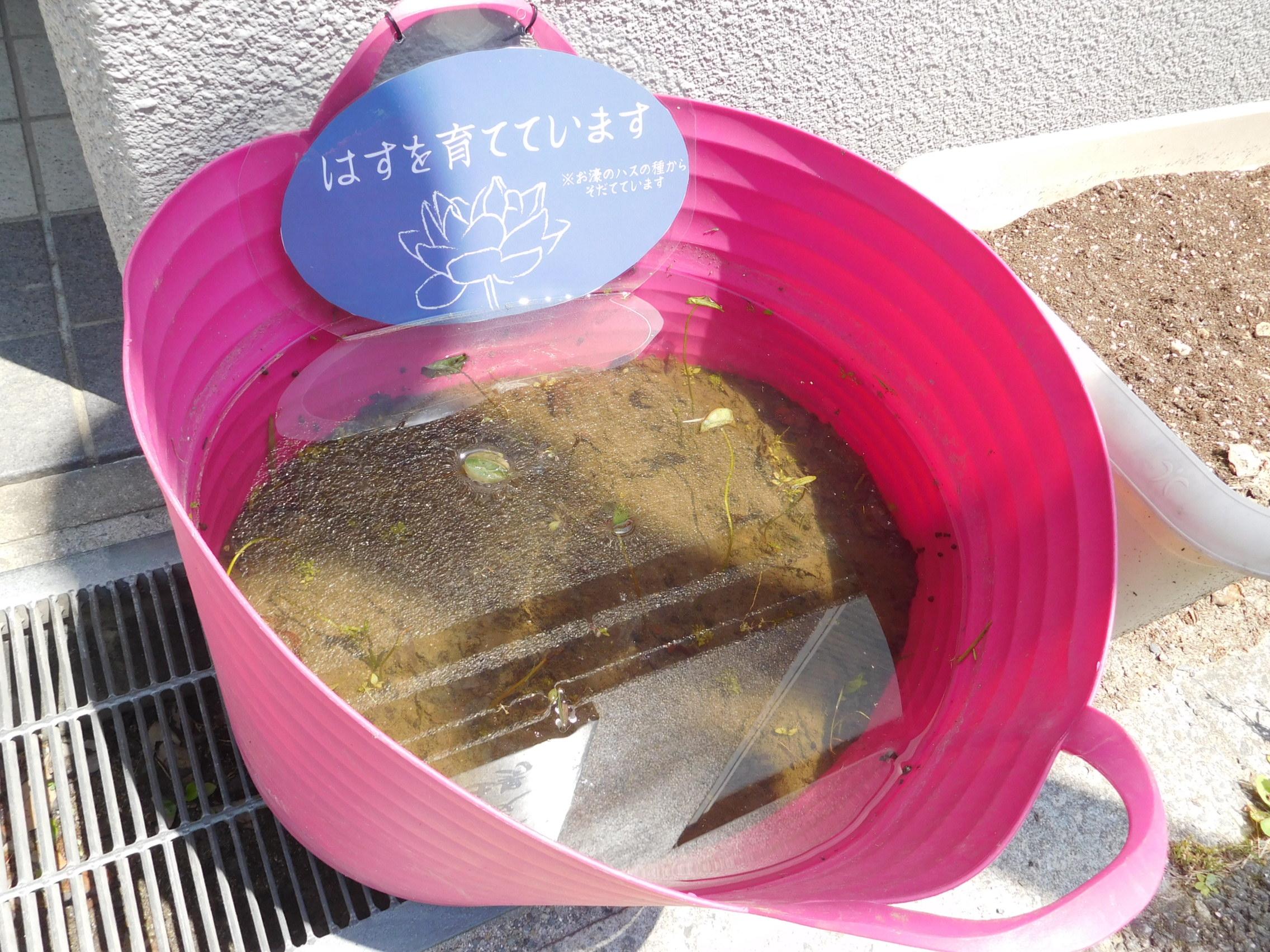 http://www.midorimachi.jp/blog/DSCN4333.JPG