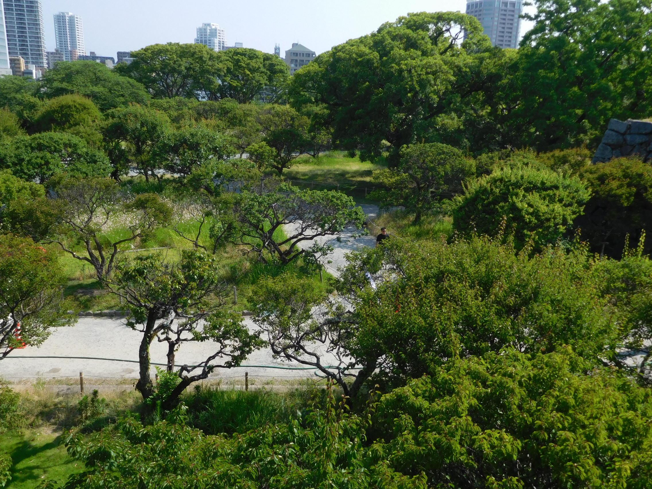 http://www.midorimachi.jp/blog/DSCN4695.JPG
