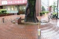 天神三井のクスノキ地際.jpg