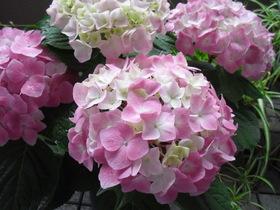 2011_0529画像0002.JPG
