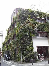 緑の家2.jpg