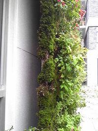 緑の家3.jpg