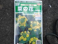 菜の花の種.jpgのサムネール画像
