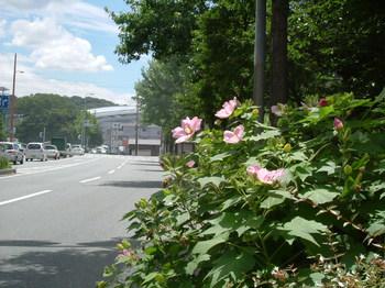 254博多の森2号1.JPG