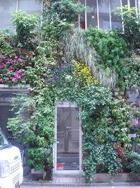 緑の家入り口.jpg