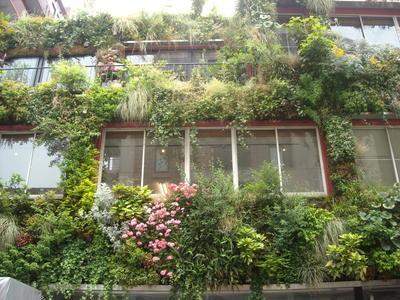 緑の家窓.jpg