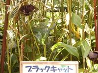 http://www.midorimachi.jp/blog/assets_c/2012/08/%E7%94%BB%E5%83%8Fnatu%20048-thumb-200x150-4011-thumb-200x150-4012.jpg
