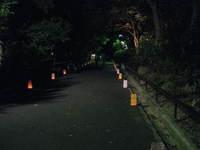 8.4動植物園灯明 044.jpgのサムネール画像のサムネール画像