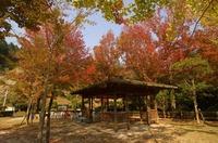 abutayama17102703.jpg