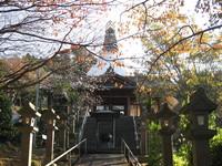 仏舎利塔と御会式桜.jpg