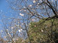 花弁は5枚.jpg