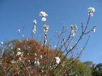 花弁10~20枚.jpg