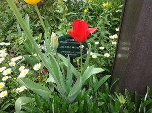 k17 博多花と緑の会.jpg