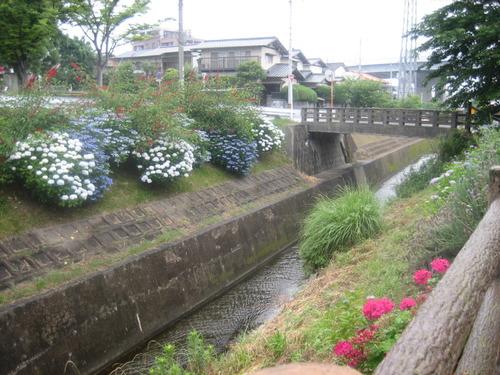 横内公園アジサイ.JPG