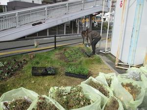 参道花壇16.JPG