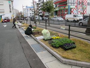 参道花壇1.JPG