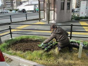参道花壇5.JPG