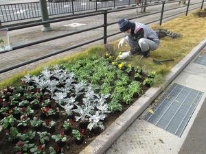 参道花壇8.JPG