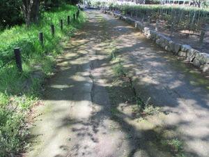 園路写真.JPG