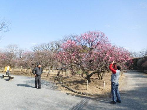 http://www.midorimachi.jp/blog/assets_c/2017/01/DSCN3474-thumb-500xauto-16600.jpg