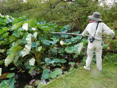 http://www.midorimachi.jp/blog/assets_c/2017/06/DSCN2036-thumb-400xauto-17012.jpg
