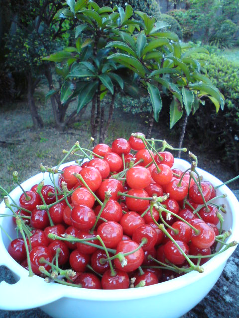 cherry11.jpg