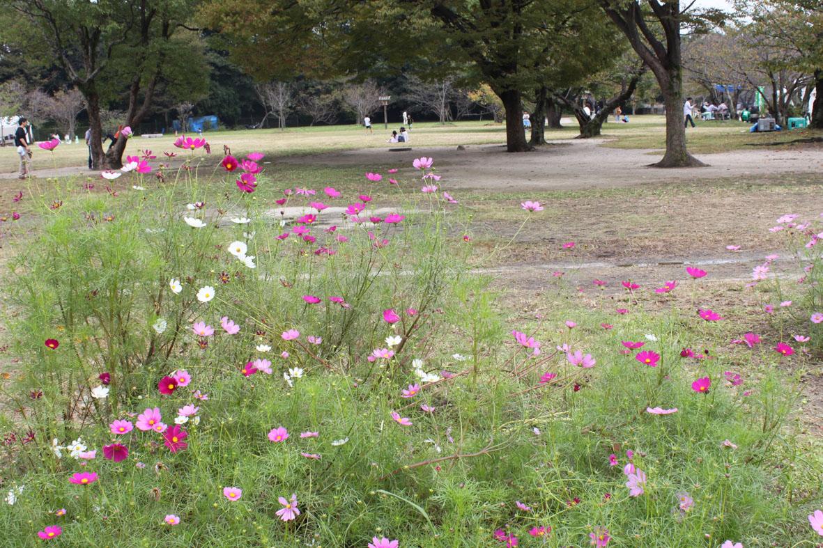 http://www.midorimachi.jp/blog/sIMG_9011.jpg