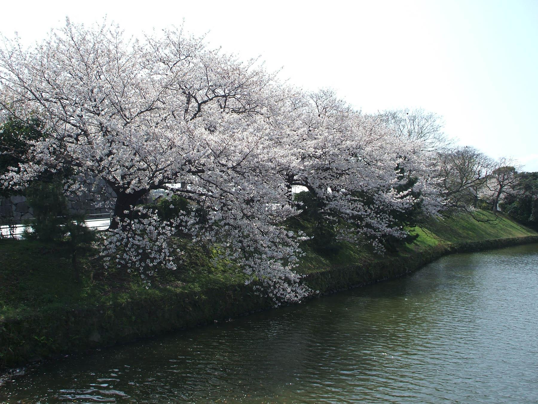 [ライトアップ]舞鶴公園